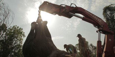Ivory Coast Pilots Novel Elephant Rescue | 100 Acre Wood | Scoop.it