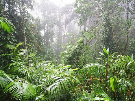 Biodiversity is more than just a numbers game | Forests | Scoop.it