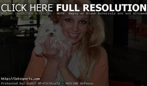 Britney Spears gives out $ 30,000 to dogs | Hot celebrities news | Scoop.it