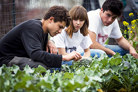 Organization Offers Fresh Produce to Local Students | Public Health Care & Topical Medicine | Scoop.it