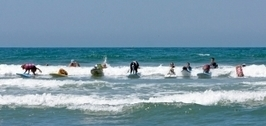 Dogs Set to Make Waves at HWAC 7th Annual Surf Dog Surf-a-thon | Pet News | Scoop.it