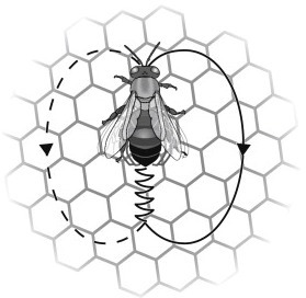 Mechanisms of collective decision-making in bees (Politicians & Proselytizers) | Brainfriendly, motivating stuff for ESL EFL learners | Scoop.it