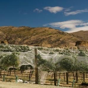 NZ wine exports reach record $1.3 billion | The Wine & Spirits Market | Scoop.it
