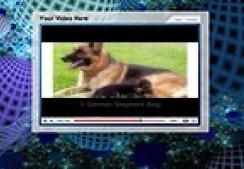 Top Five Smartest Dogs | video | Scoop.it