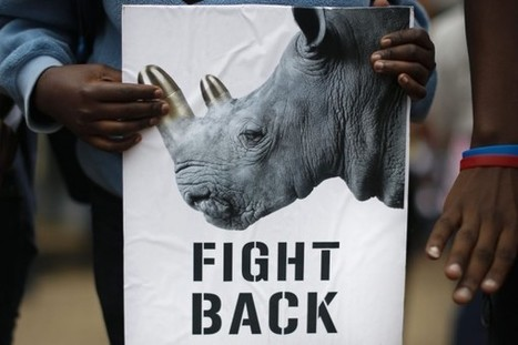 Vietnam embarks on rhino horn myth busting campaign | What's Happening to Africa's Rhino? | Scoop.it