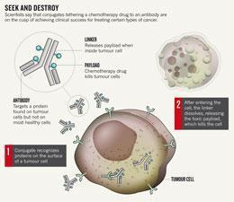 Toxic antibodies blitz tumours : Nature News | Getting your ADC to the clinic | Scoop.it
