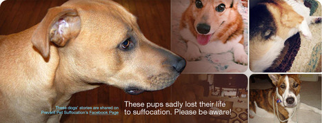 Pet Suffocation | Dog Health Advocacy | Scoop.it