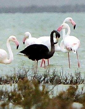 Wildlife | GarryRogers NatCon News | Scoop.it