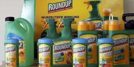 Bruxelles propose un sursis de dix-huit mois pour le glyphosate | apiculture31 | Scoop.it