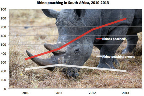 790 rhinos poached in South Africa this year   What's Happening to Africa's Rhino?   Scoop.it