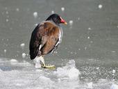 Les oiseaux souffrent du froid... - Actualité - LPO | Biodiversité | Scoop.it