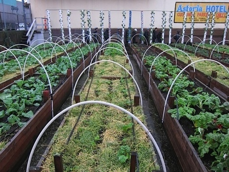 Urban Agriculture at archimemo   Vertical Farm - Food Factory   Scoop.it