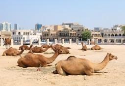 Qatar informatie | Bahrein en Qatar | Scoop.it