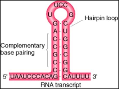 REPLICACION Y TRANSCRIPCION DEL ADN | Biología | Scoop.it