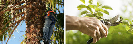 V 1 Vasquez Tree Service offers a residential tree service in Bradenton | V 1 Vasquez Tree Service | Scoop.it