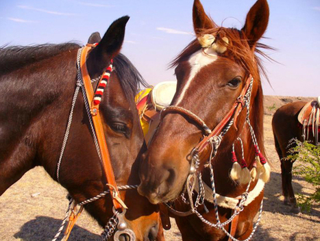 My Favorite Dude Ranch - Mexico Ranch Vacations Photo Journey   Equestrian Vacations   Scoop.it
