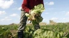 Une association pour les agriculteurs victimes des pesticides - Société - Nouvelobs.com   Toxique, soyons vigilant !   Scoop.it