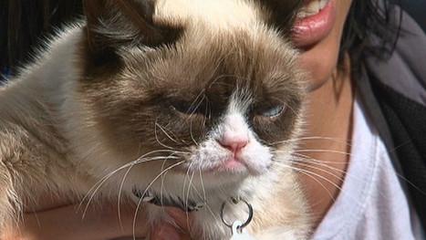 The unlikely star of SXSW: Grumpy Cat | Feline Health and News - manhattancats.com | Scoop.it