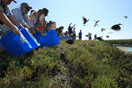 Saving The Birds At Seal Beach Wildlife Refuge - Neon Tommy | Birds and Birding | Scoop.it
