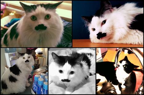 What's new pussycat? Woah, Woah - MetroNews Canada | Cats | Scoop.it