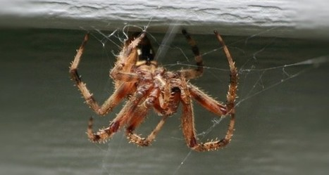 12 Natural Ways To Rid Your Home Of Spiders (No. 6 Will Do It FAST) | Off The Grid News | Gardening | Scoop.it