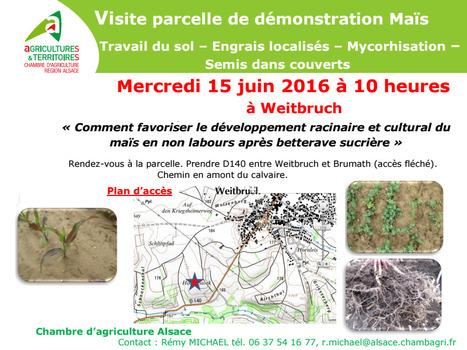 Weitbruch (67)Visite démonstration Maïs Travail du sol, Engrais localisés, Mycorhisation, Semis dans couverts le 15 juin 2016 à 10 h   AC Agriculture de Conservation   Scoop.it