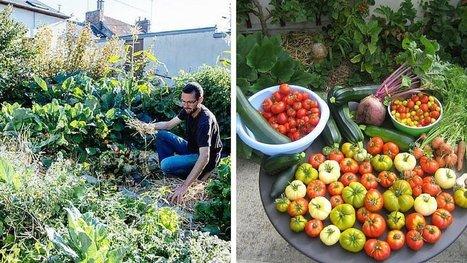 Comment produire 300 kg de légumes bio dans un potager de 25m2 ? Réponse avec Joseph Chauffrey ! | Nouveaux paradigmes | Scoop.it