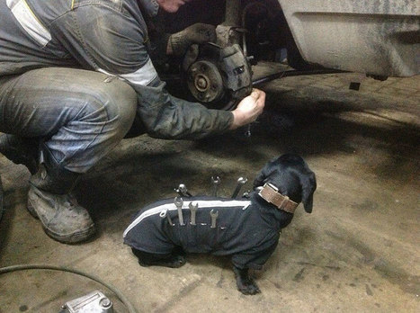Tool-Dog Helping Humans Fix Cars Is The Cutest Little Assistant | Xposed | Scoop.it