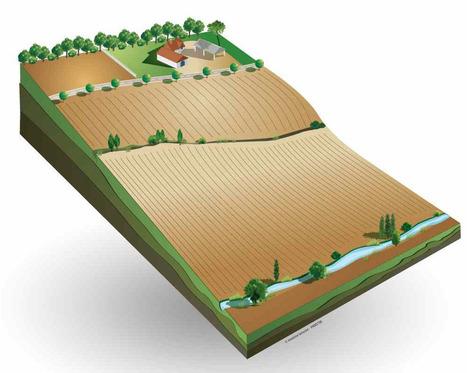L'Agroforesterie en 10 questions - Association Française d'agroforesterie | Un sol vivant pour nos enfants | Scoop.it