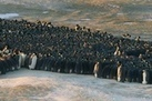Huddle Up: the Surprising Physics of Penguin Movements - LiveScience.com   Physics is at school   Scoop.it