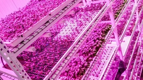 UK's first commercial-scale aquaponic urban farm could be blueprint for city farming - Factor | Better Mobility, Living, Logistics, Infrastructure | Scoop.it