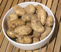 Connectivism: Is There Learning in Potatoes? | Royce Kimmons | Connectivism | Scoop.it