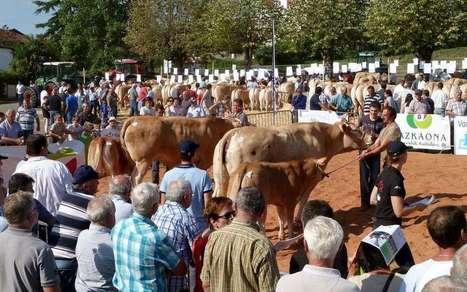 Blondes d'Aquitaine : le palmarès du concours relevé de Saint-Palais | Agriculture en Pyrénées-Atlantiques | Scoop.it