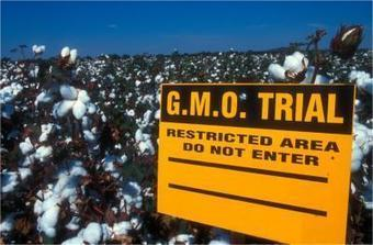 Commission approves GM seeds to enter EU   Food issues   Scoop.it