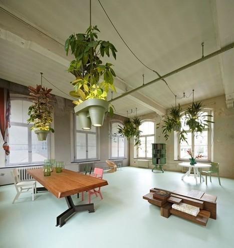 Plantes vertes une autre façon de les voir | La Location de plantes | Scoop.it