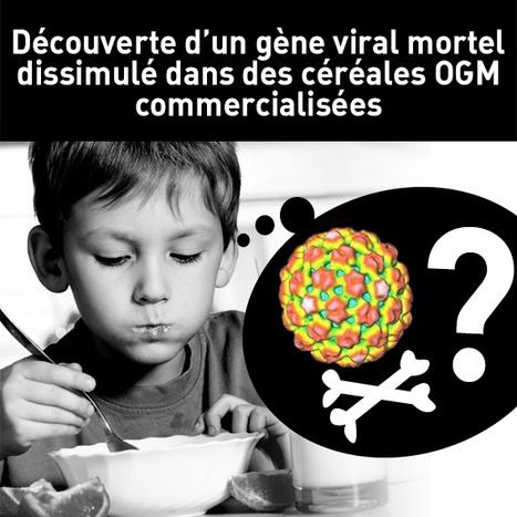 Découverte d'un gène viral mortel dissimulé dans des céréales OGM commercialisées | Forgeron | Scoop.it