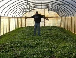 Growing Food, Growing Power: Milwaukee, Wisconsin Urban ...   Vertical Farm - Food Factory   Scoop.it