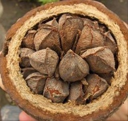 Aliments riches en sélénium   Plantes médicinales   Scoop.it