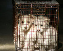 END PUPPY MILLS! - The Petition Site | Animal Welfare | Scoop.it