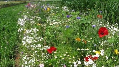 Toute l'agro-écologie en un clic sur www.boitagri.com | Actualités générales Environnement et Développement durable | Scoop.it
