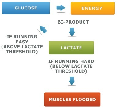 Improving Your Lactate Threshold | Distance Running | Scoop.it