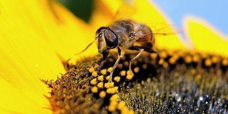 Mobilisation européenne contre les pesticides tueurs d'abeilles | Des infos sur notre planète : ecologie , biodiversité | Scoop.it
