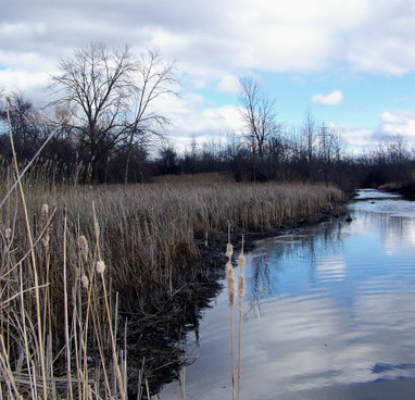 "One More Time – Here Is A Video That Tells It Like It Is When It Comes To The Serious Threat This Thing Government Reps Call ""Biodiversity Offsetting"" Poses To Niagara's Natural Wetlands 