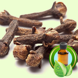 Clove Bud Native Distilled ESSENTIAL OIL | Essential-Oils | Scoop.it