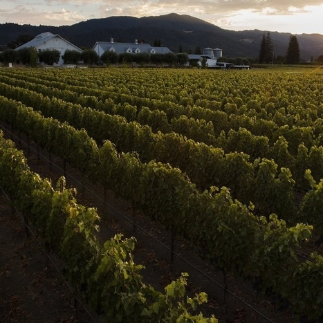 Are bacteria the secret to a great wine vintage? | Pinot Post | Scoop.it