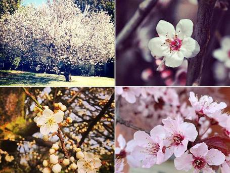 Spring: Britain's Instagram bloom | Social Media Useful Info | Scoop.it
