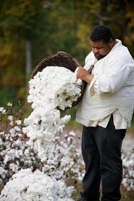 The Cotton Kingdom: A Photographic Essay | Our Black History | Scoop.it