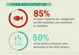 Biodiversity - What's Happening to Biodiversity? (Infographic) | Theme 3: Resources & the Environment | Scoop.it