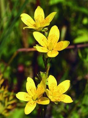 Des centaines d'espèces de la flore de France menacées de disparition | TRANSITURUM | Scoop.it