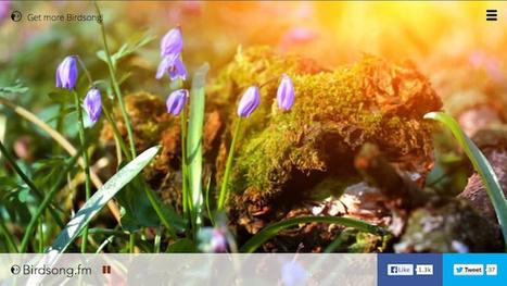Birdsong.fm Brings Nature to your Desktop - Cult Hub Magazine | Les sons de la nature | Scoop.it
